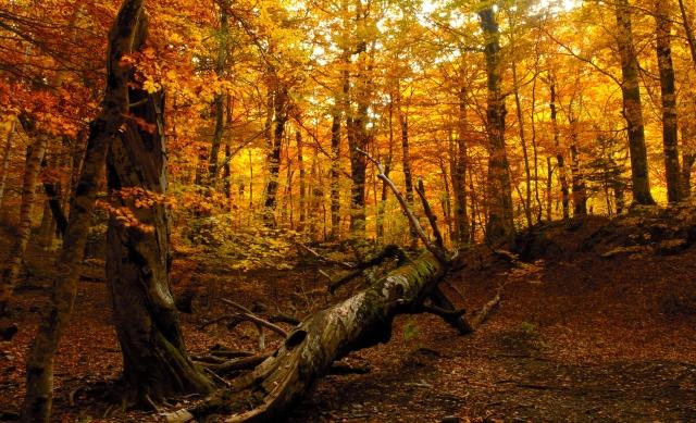 Wooded Scene
